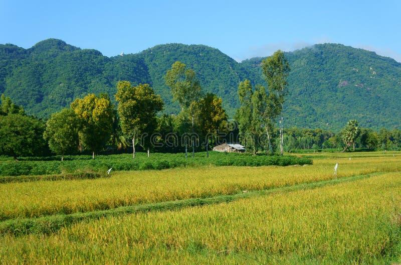 Vietnamesisches Dorf, Berg, Haus, Reisfeld stockbild