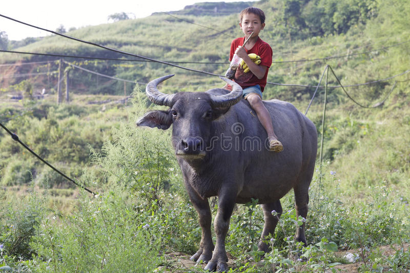 Vietnamesisches Kind auf Wasser-Büffel stockbild