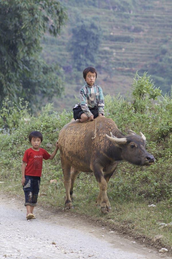 Vietnamesisches Kind auf Wasser-Büffel lizenzfreies stockfoto