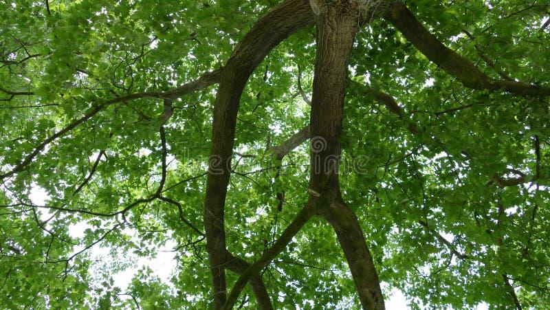 Vieuw differente di vecchio albero fotografia stock