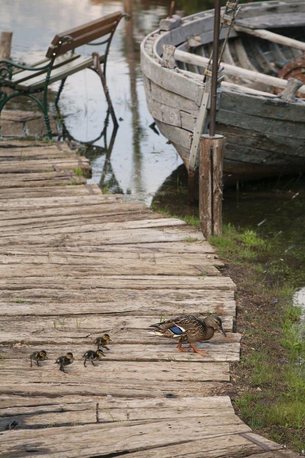 Vieux, abandonné bateau de pêche sur les Doc.s avec des canetons image stock