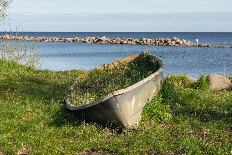 Vieux a abandonn? le bateau en bois sur le lac envahi avec l'herbe photos stock
