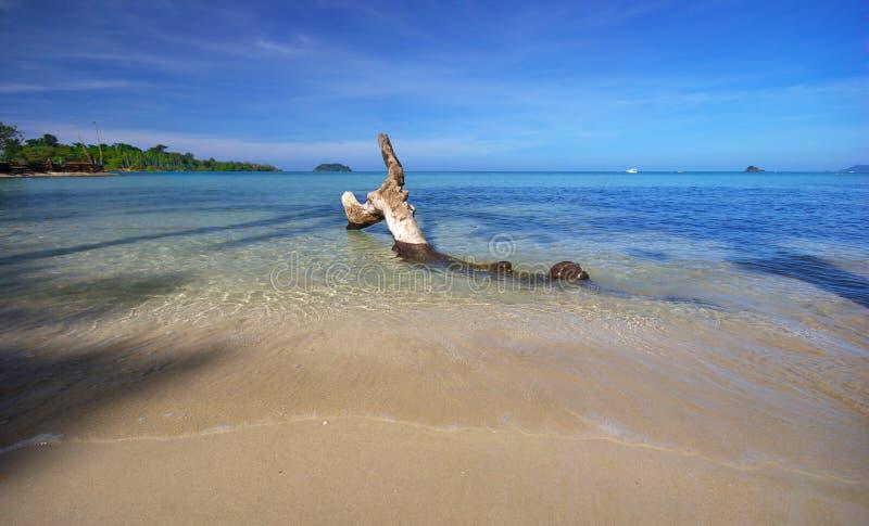 Vieux accroc et marée de plage tropicale photos stock