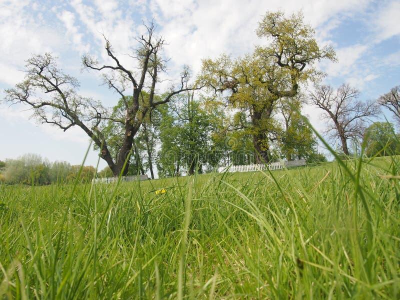Vieux arbres énormes en parc image stock