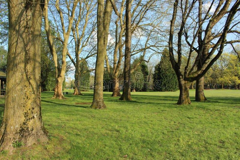 Vieux arbres étendus dans le domaine images stock