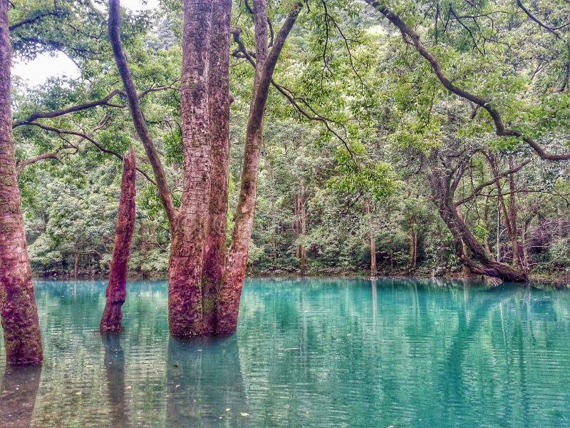 Vieux arbres s'élevant dans l'eau, Libo photos stock