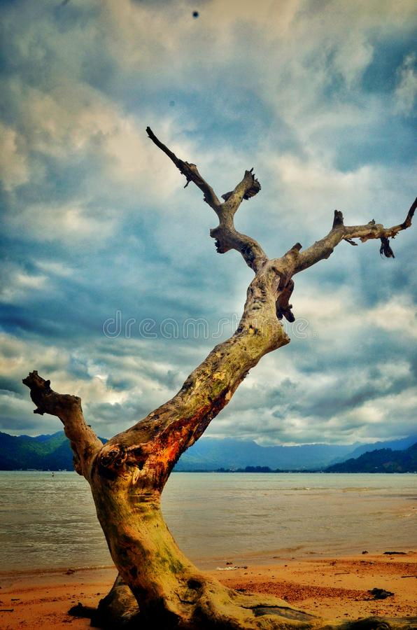 Vieux arbres sur les océans de mer de plage photographie stock libre de droits