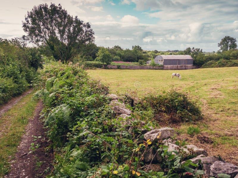 Vieux bâtiment de ferme avec le toit rond en métal, le champ vert, la petite route et la barrière en pierre Horizontal rural photos libres de droits