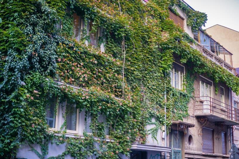Vieux bâtiments couverts dans le lierre photos stock
