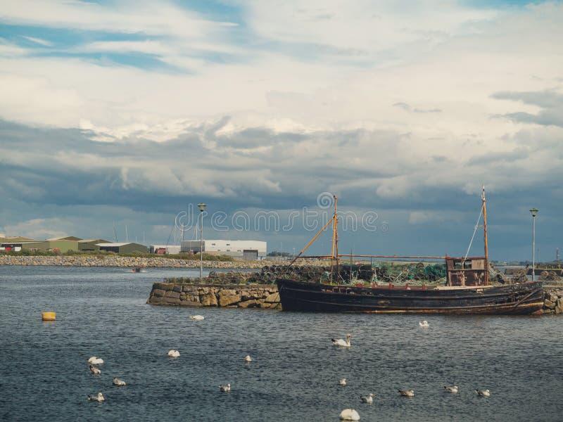 Vieux bateau de pêche et cygnes blancs colonie, Claddagh, ville de Galway, Irlande, ciel nuageux image libre de droits