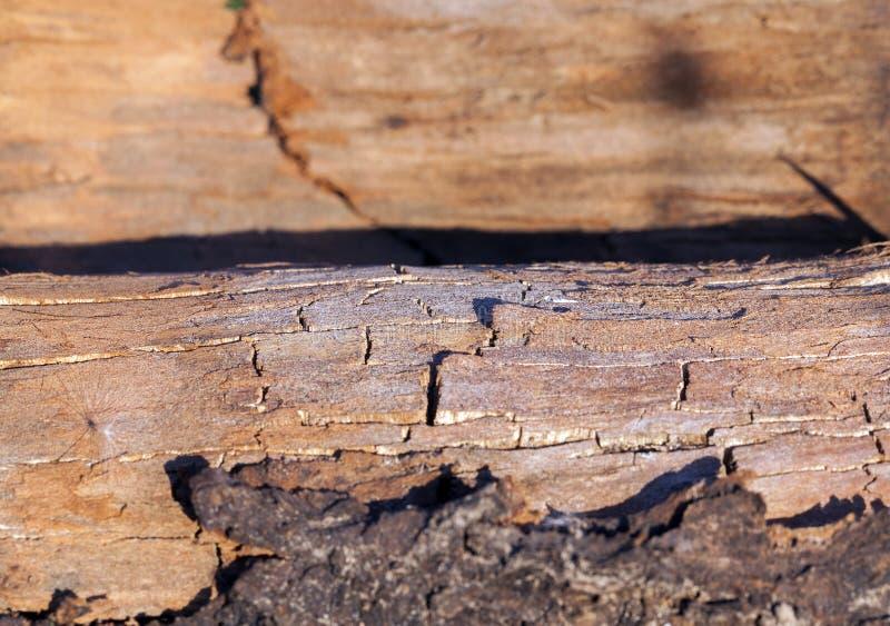 Vieux bois criqué photo stock