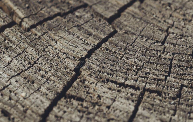 Vieux bois criqué superficiel par les agents photographie stock