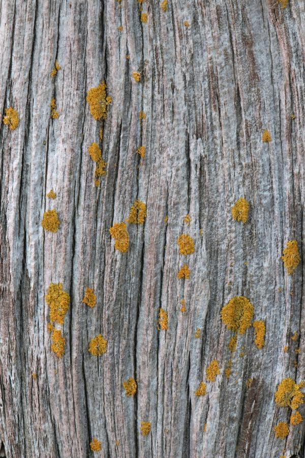 Vieux bois de grange avec des lichens image stock