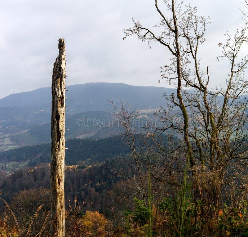 Vieux cadavre de l'arbre en montagnes photos stock