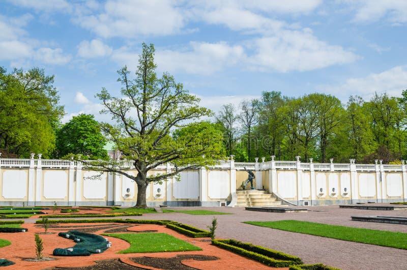 Vieux chêne en parc de Kadriorg, Tallinn, Estonie photographie stock libre de droits