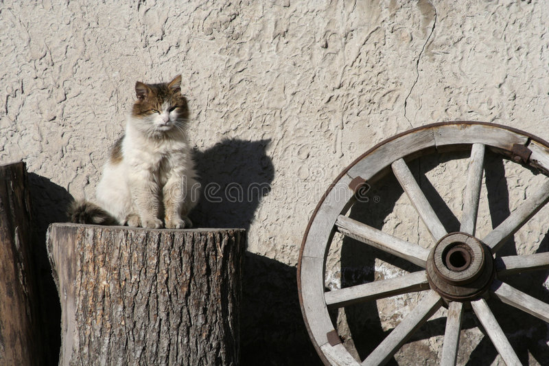 Vieux chat photo stock