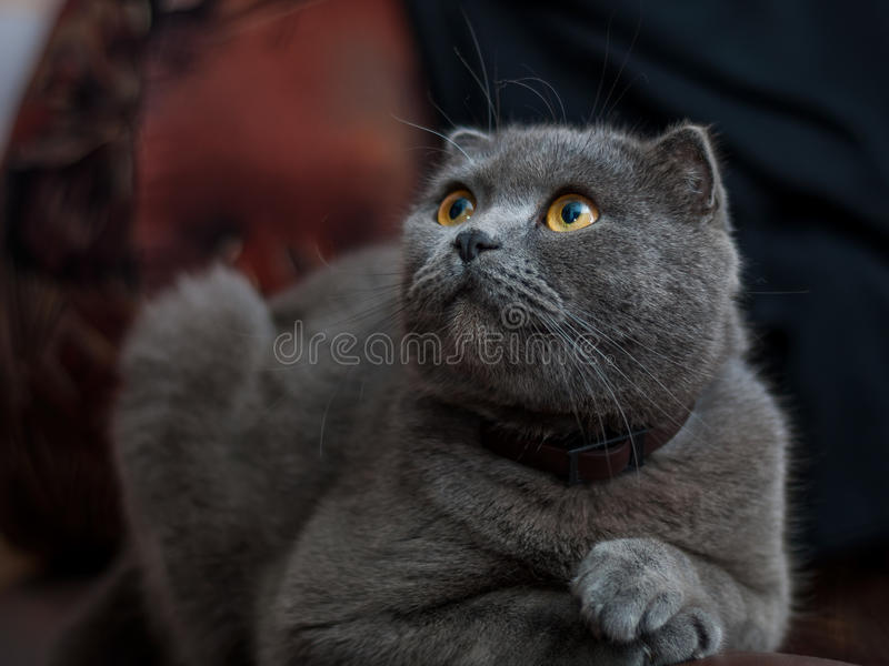 Vieux chat image stock
