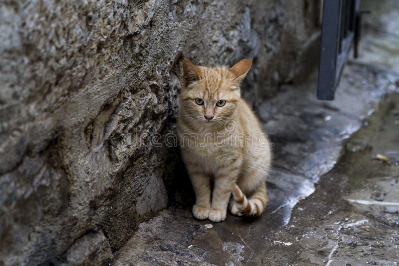 Vieux chat Budva de ville images stock