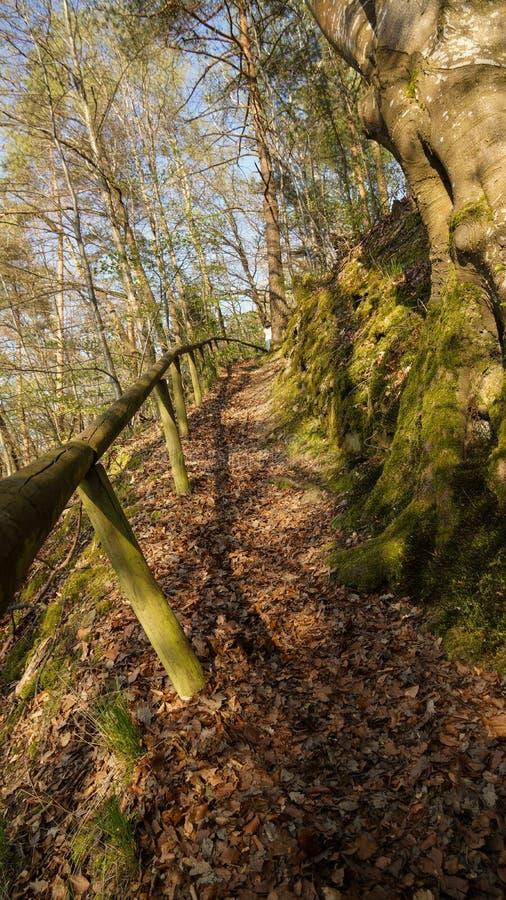 Vieux chemin à travers le rail en bois de forêt image libre de droits