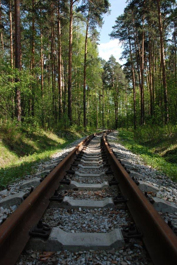 Vieux chemins de fer rouillés dans la forêt à feuilles persistantes, printemps photos libres de droits