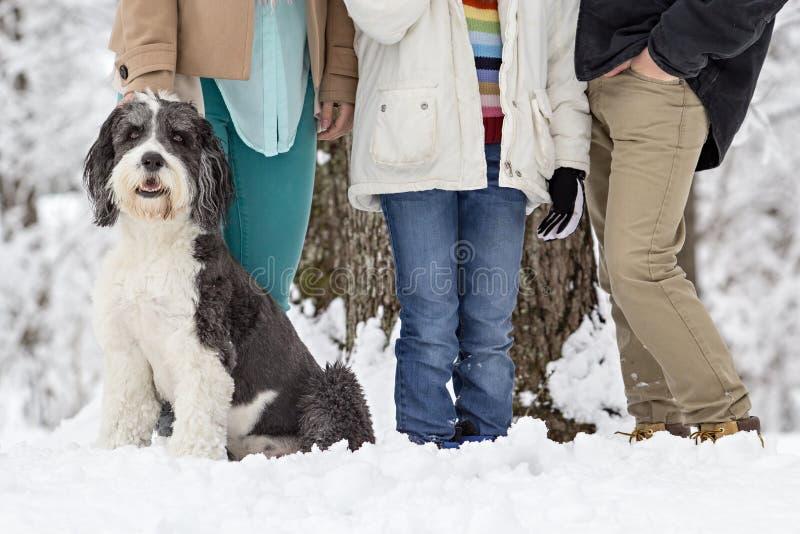 Vieux chien de berger anglais se reposant près des jambes de trois enfants image stock