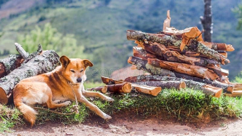 Vieux chien se trouvant sur le bois de chauffage images stock