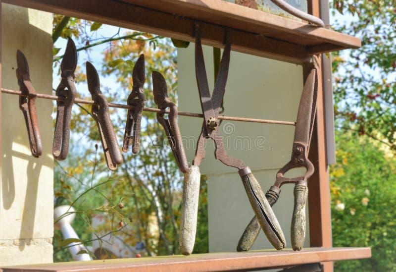 Vieux ciseaux de fer de vintage pour l'horticulture photos libres de droits