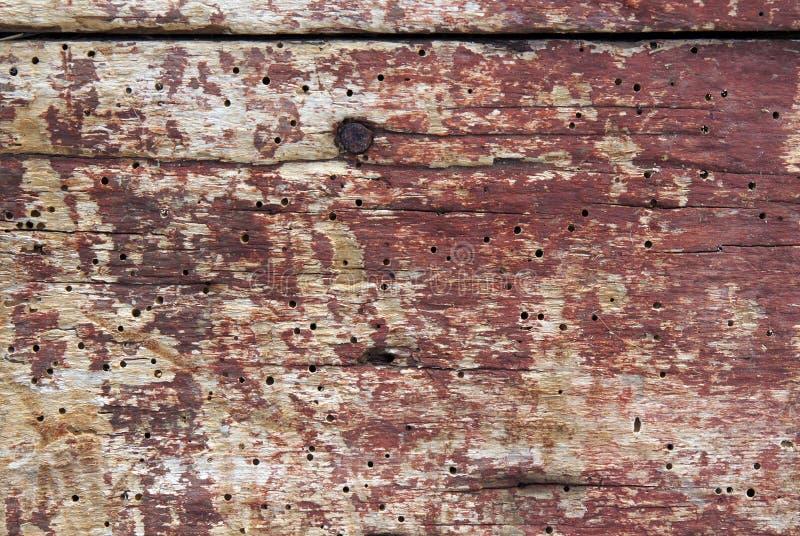 Vieux conseils avec des trous de ver de bois image stock