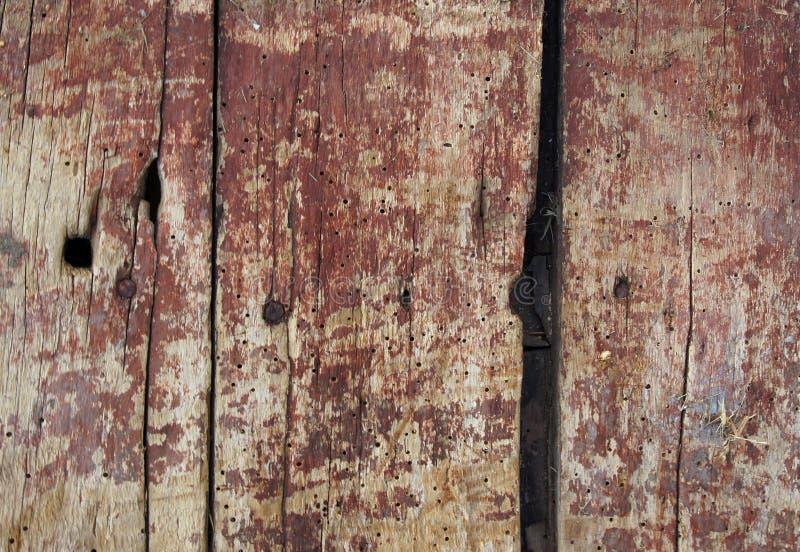 Vieux conseils avec des trous de ver de bois photo stock
