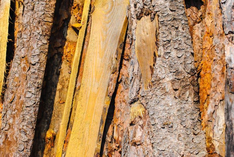 Vieux conseils en bois Modèle naturel, qualitatif Texture photos stock