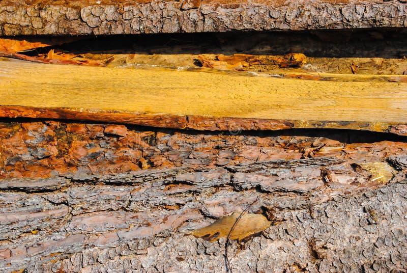 Vieux conseils en bois Modèle naturel, qualitatif Texture photographie stock
