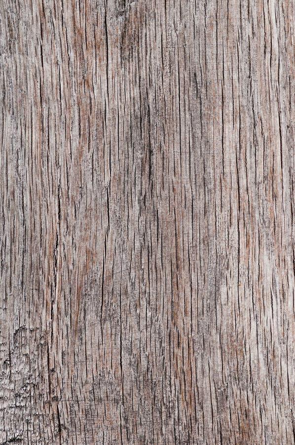 Vieux criqués secs poreux de fond en bois de texture vident la planche naturelle âgée de vintage de couleur matérielle de plan ra image libre de droits