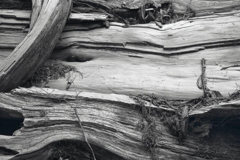 Vieux détail de tronc en noir et blanc canada images stock