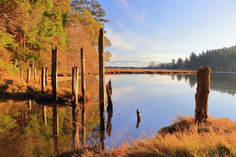 Vieux empilages en bois dans la lumière même d'or au parc régional de lagune pleine d'esprit, île de Vancouver image stock
