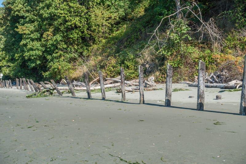 Vieux empilages sur Shoreline image stock