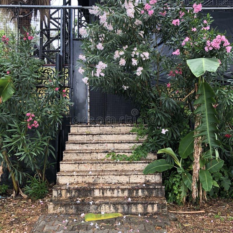 Vieux escaliers photos stock