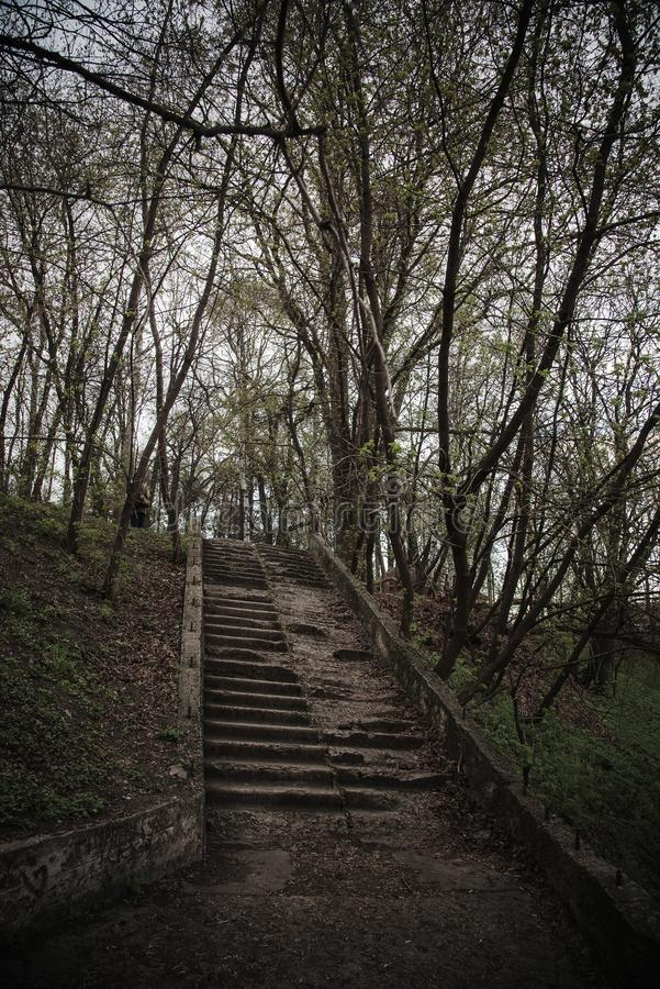 Vieux escaliers en parc, avec des étapes ruinées, s'émiettantes et couvertes d'herbe Tonalité sombre et mystique Concept de la dé photos libres de droits
