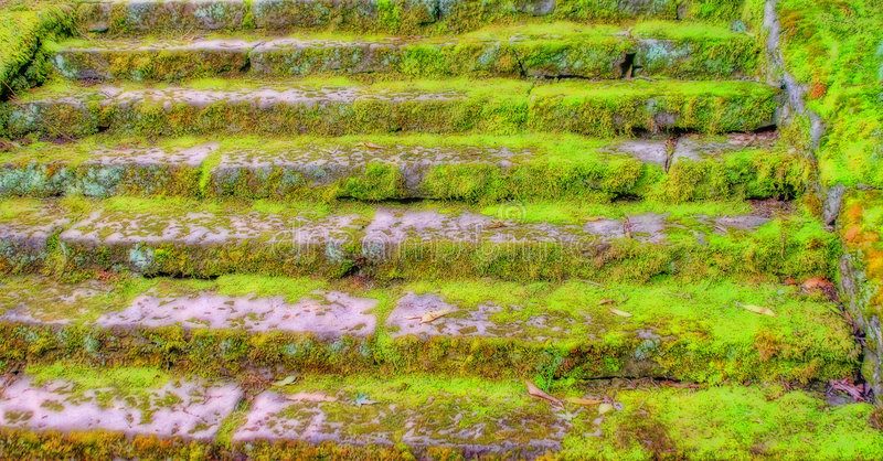 Vieux escaliers moussus image stock