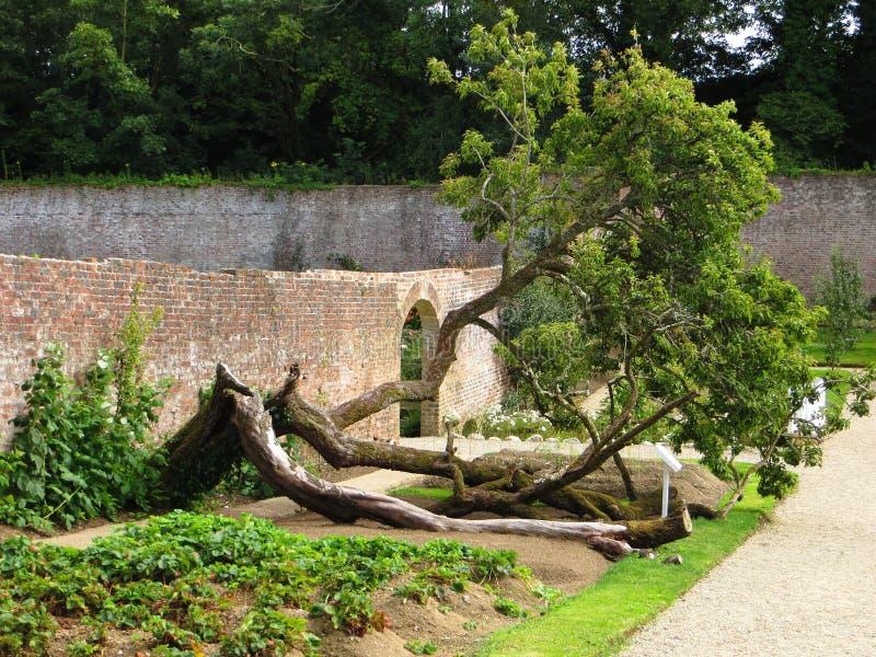 Vieux et oblique arbre image libre de droits