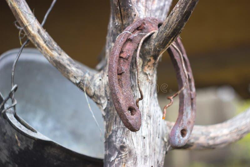 Vieux fer à cheval rouillé sur un arbre photographie stock libre de droits