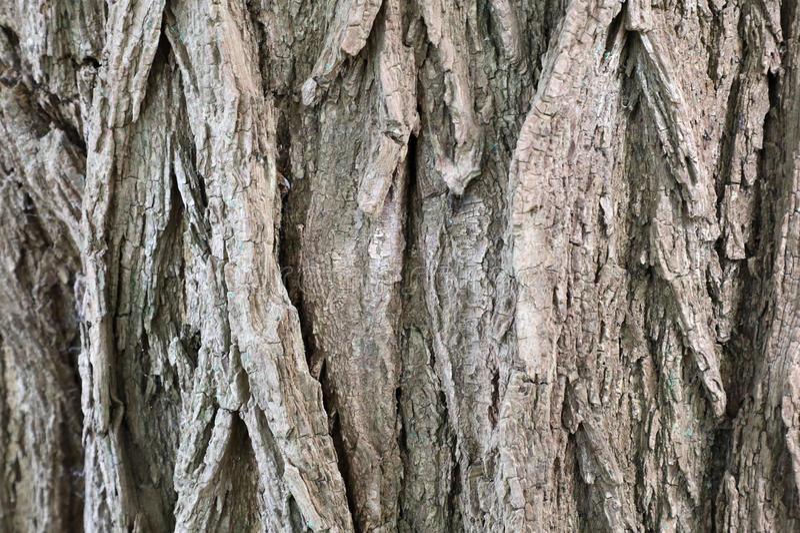Vieux fond d'écorce d'arbre photographie stock libre de droits