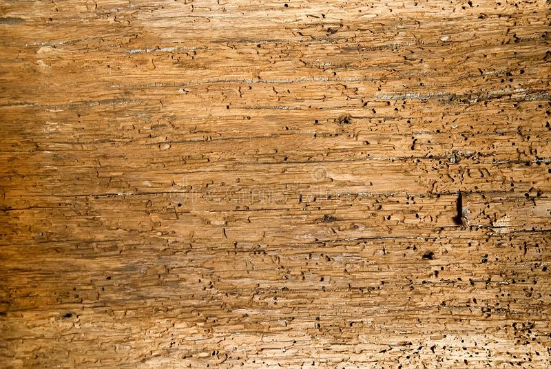 Vieux fond de conseils en bois complètement des trous de taret photos stock