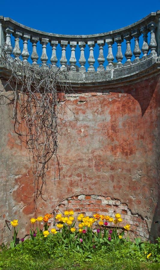 Vieux fond de mur de briques avec des tulipes photos stock