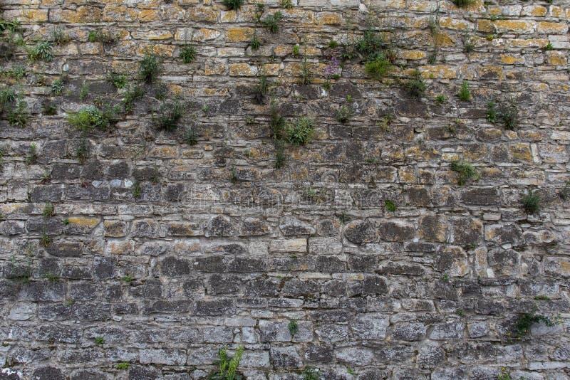 Vieux fond de mur en pierre image libre de droits