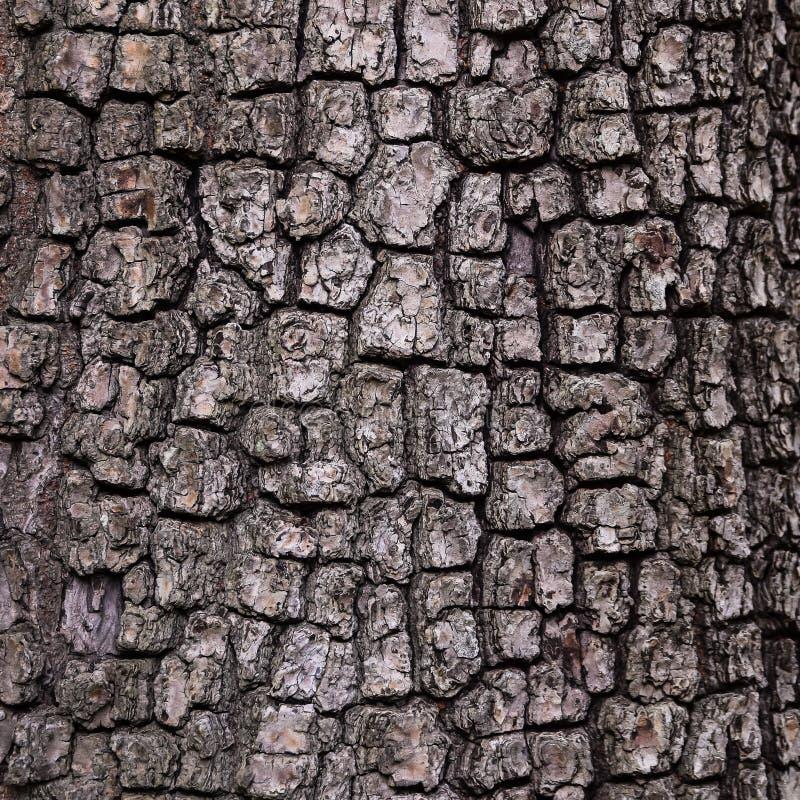 Vieux fond en bois de texture d'arbre, modèle d'écorce photo libre de droits