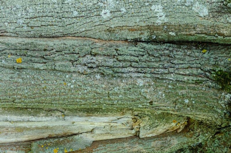 Vieux fond en bois de texture d'arbre images stock
