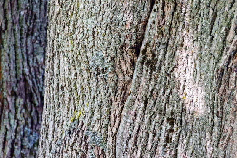 Vieux fond en bois de texture d'arbre image stock
