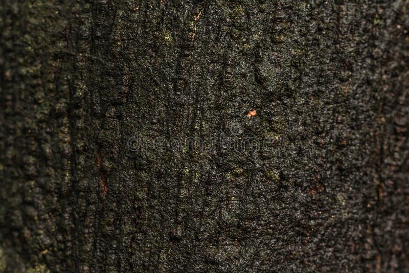 Vieux fond en bois de texture ou de tronc Matériel en bois de la surface humide naturelle photo libre de droits