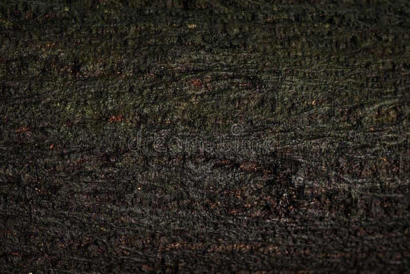 Vieux fond en bois de texture ou de tronc Matériel en bois de la surface humide naturelle images stock