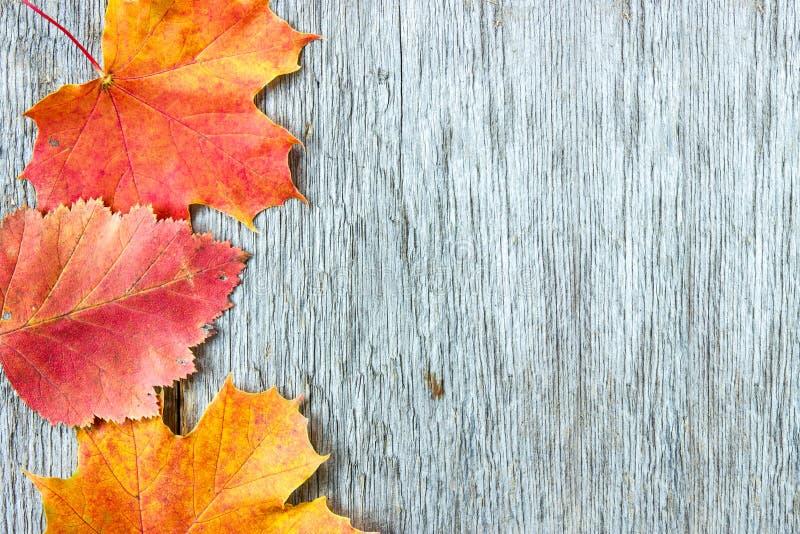 Vieux fond en bois et feuilles automnales image libre de droits